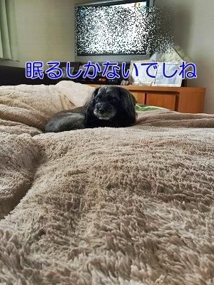 f0326925_23410821.jpg