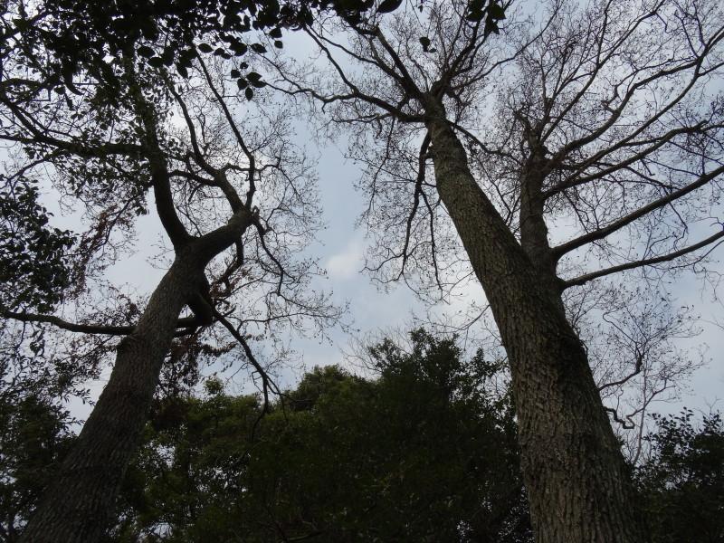 うみべの森の植物観察 & 大阪さともり視察来訪     by     (TATE-misaki)_c0108460_21493983.jpg