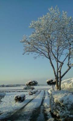 昨晩雪が降りました。_d0026905_64126100.jpg