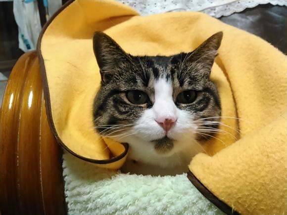 【猫】仲良く?_f0141609_12285718.jpg