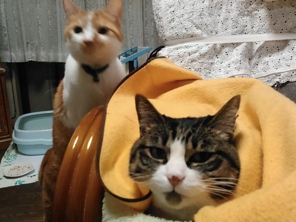 【猫】仲良く?_f0141609_12291581.jpg