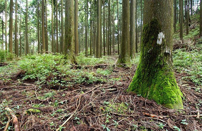 大井川の木で家をつくる会facebookページのお知らせ_c0069972_1812398.jpg