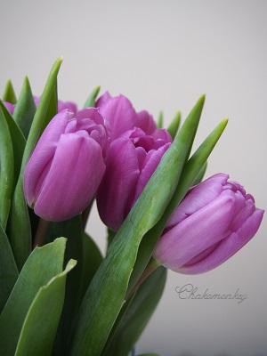 Libertyのお花屋さん_f0238789_0313172.jpg