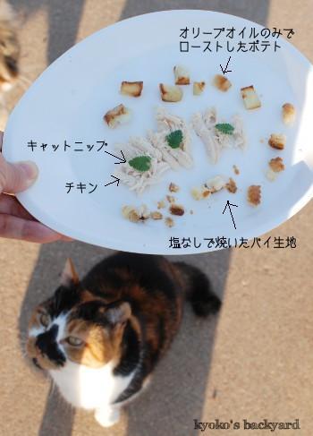 猫たちの誕生日パーティ その1_b0253205_01135438.jpg