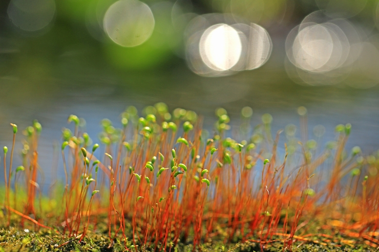 水辺で出会った不思議な植物_c0104227_2124123.jpg