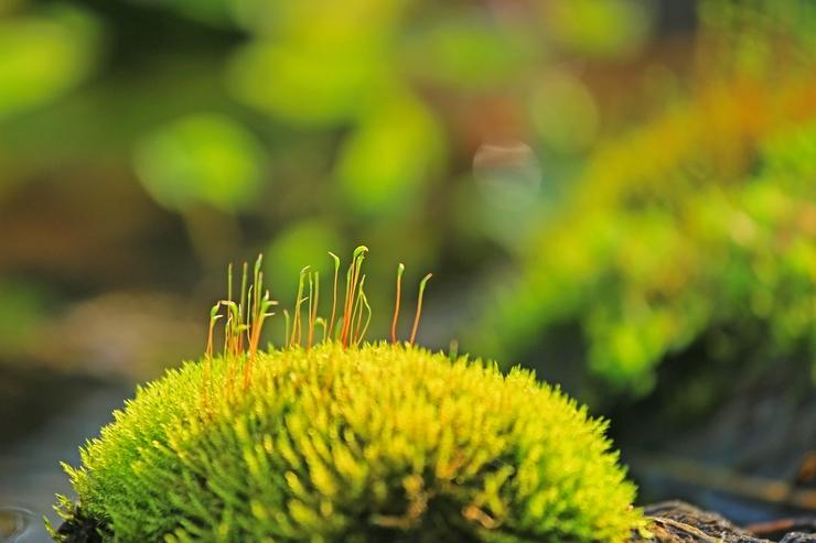水辺で出会った不思議な植物_c0104227_21245548.jpg