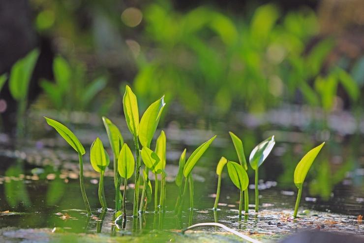 水辺で出会った不思議な植物_c0104227_21272611.jpg