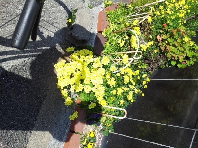 黄色い花_e0051428_23423166.jpg