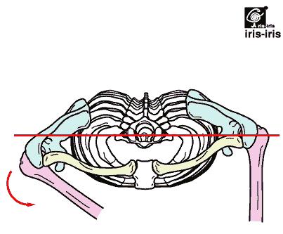 肝臓疲労による肘の痛み〜ある日の施術より〜_e0073240_793770.jpg
