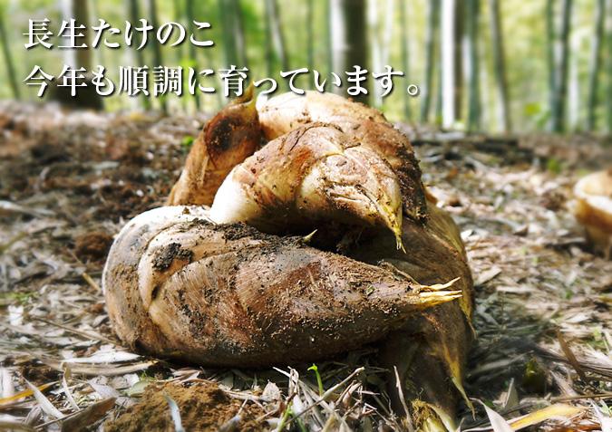 幻の白い「長生たけのこ」 平成27年度予約受付スタート!!_a0254656_17301037.jpg