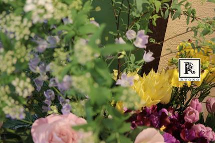 「春が来たみたーい!」_c0128489_23245371.jpg