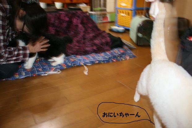 しゅうじ&あきら 新生活スタート!_f0242002_12324212.jpg