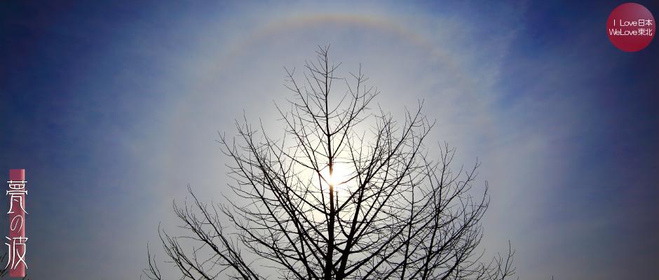 銀杏と日暈(にちうん・ひがさ)_b0157849_17282999.jpg