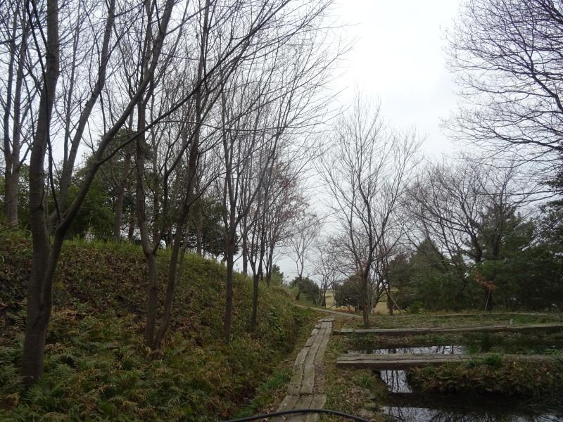 コクランの道作り本格的に始まった in うみべの森_c0108460_16203598.jpg