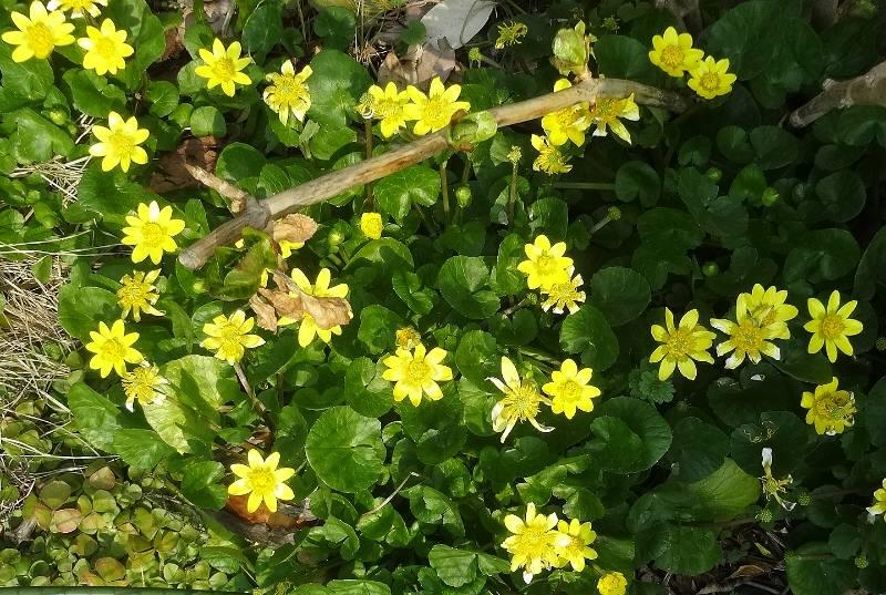 早春は黄色_f0059673_97871.jpg