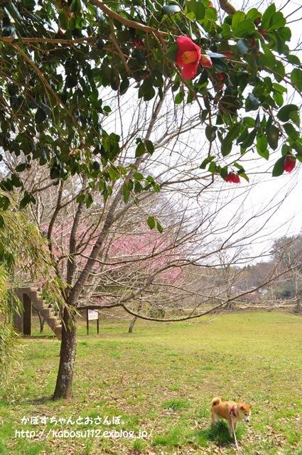 春ですよ_a0126590_06543266.jpg