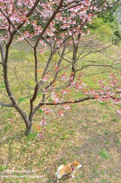 春ですよ_a0126590_06544605.jpg