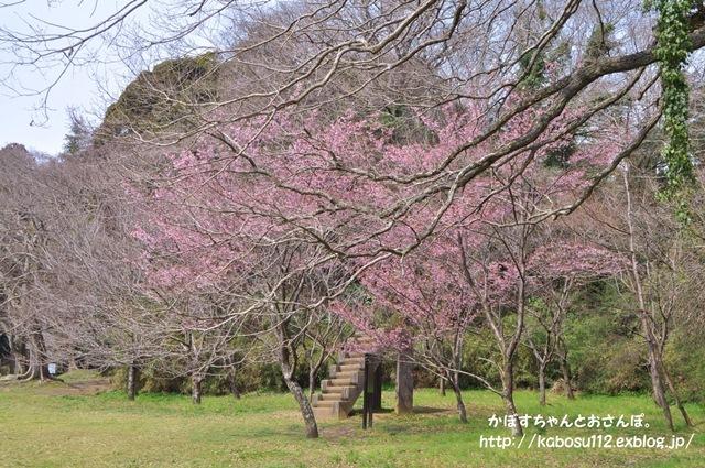 春ですよ_a0126590_06553586.jpg
