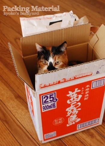 梱包材ではしゃぐ猫たち_b0253205_04550607.jpg