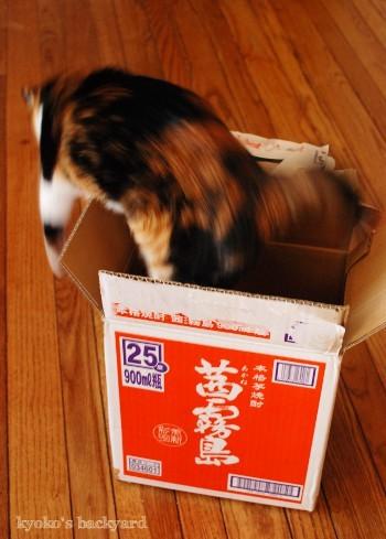 梱包材ではしゃぐ猫たち_b0253205_04553492.jpg