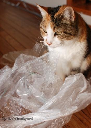 梱包材ではしゃぐ猫たち_b0253205_04562912.jpg