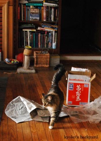 梱包材ではしゃぐ猫たち_b0253205_04573105.jpg