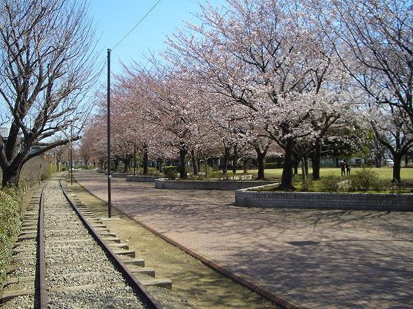 2015年春「桜わくわくウォーク」の帰り道_d0240916_18181818.jpg