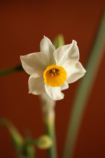一歩 一歩と 春が。。。来る_d0150720_11245055.jpg