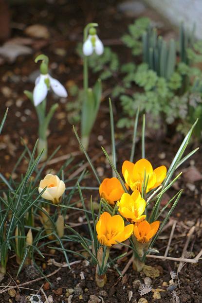 一歩 一歩と 春が。。。来る_d0150720_11245967.jpg