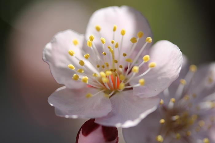 一歩 一歩と 春が。。。来る_d0150720_1133166.jpg