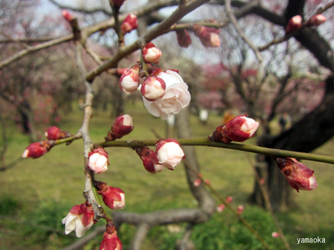 春眠。_f0071480_1755639.jpg