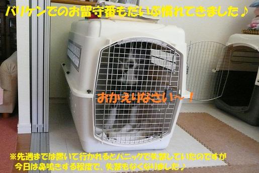 f0121712_15331545.jpg