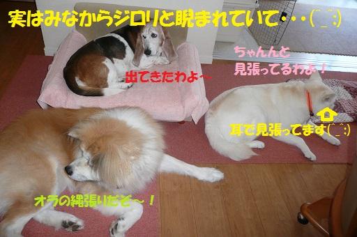 f0121712_15464615.jpg
