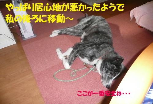 f0121712_1615270.jpg