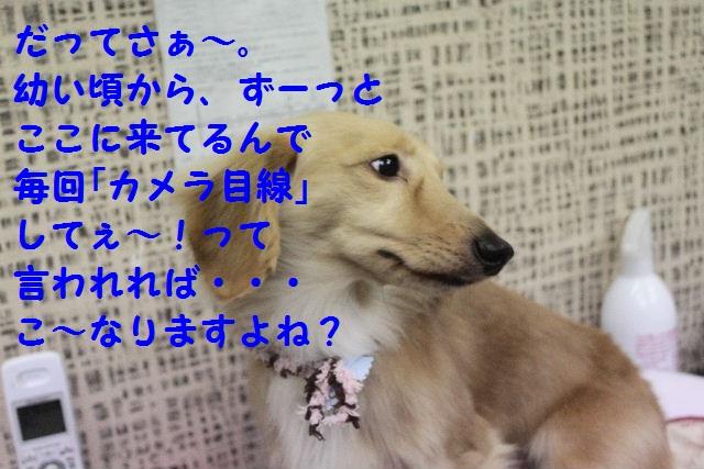 ゴールデンウィークのお知らせ!!_b0130018_2331131.jpg