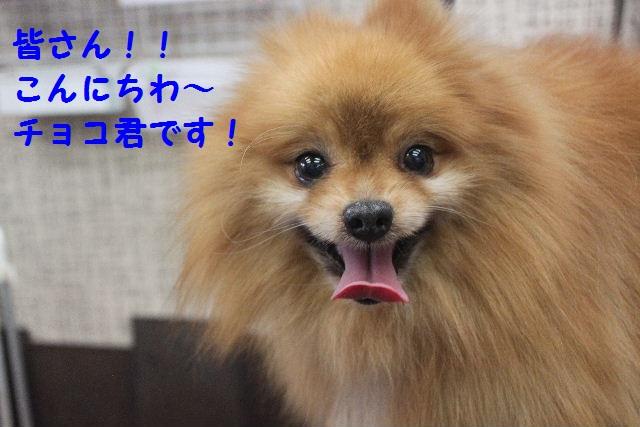 ゴールデンウィークのお知らせ!!_b0130018_23434267.jpg
