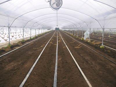 肥後グリーン 6月中旬の出荷に向け定植しました!!_a0254656_18351015.jpg