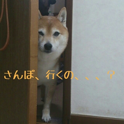 b0150665_190532.jpg