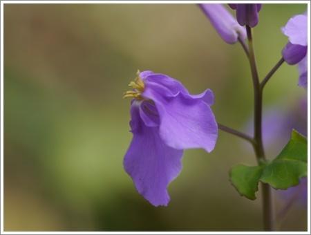我が家は春でも花が少ないから、野草で我慢しましょう(*⌒∇⌒*)テヘ♪_b0175688_22474610.jpg