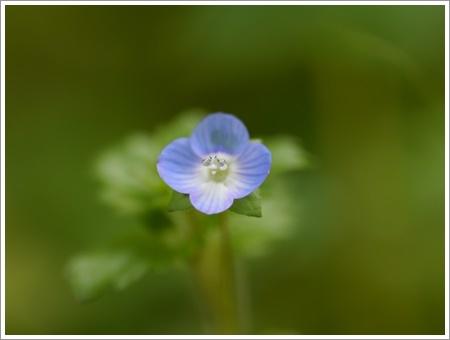我が家は春でも花が少ないから、野草で我慢しましょう(*⌒∇⌒*)テヘ♪_b0175688_22475303.jpg