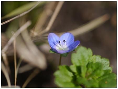 我が家は春でも花が少ないから、野草で我慢しましょう(*⌒∇⌒*)テヘ♪_b0175688_22475675.jpg