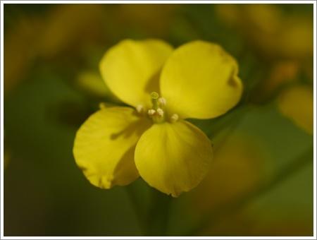 我が家は春でも花が少ないから、野草で我慢しましょう(*⌒∇⌒*)テヘ♪_b0175688_22480409.jpg