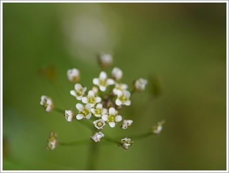 我が家は春でも花が少ないから、野草で我慢しましょう(*⌒∇⌒*)テヘ♪_b0175688_22480955.jpg