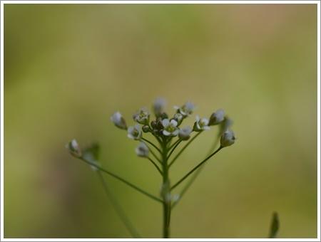 我が家は春でも花が少ないから、野草で我慢しましょう(*⌒∇⌒*)テヘ♪_b0175688_22481190.jpg