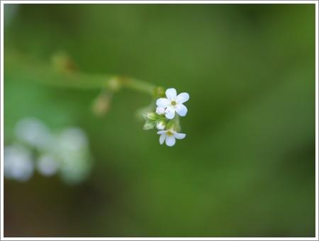 我が家は春でも花が少ないから、野草で我慢しましょう(*⌒∇⌒*)テヘ♪_b0175688_22481774.jpg