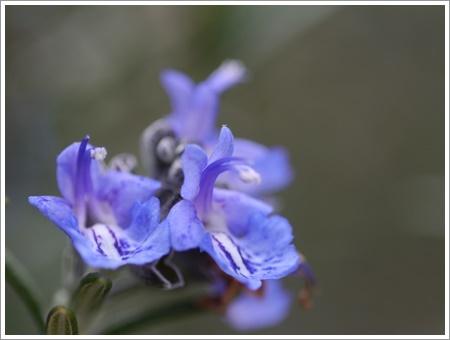 我が家は春でも花が少ないから、野草で我慢しましょう(*⌒∇⌒*)テヘ♪_b0175688_22483786.jpg