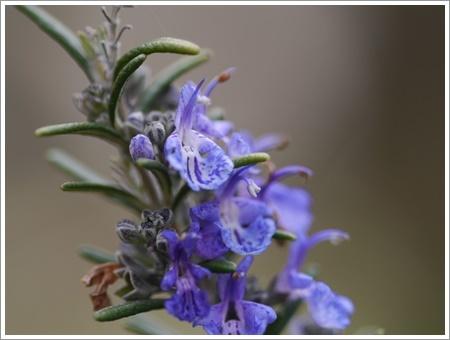 我が家は春でも花が少ないから、野草で我慢しましょう(*⌒∇⌒*)テヘ♪_b0175688_22483913.jpg