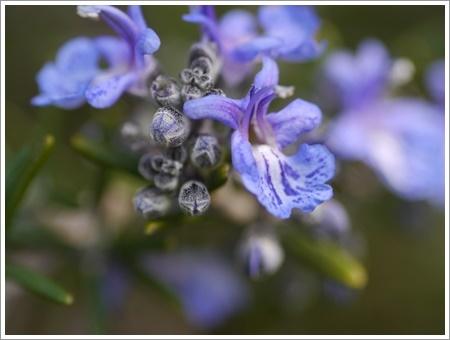 我が家は春でも花が少ないから、野草で我慢しましょう(*⌒∇⌒*)テヘ♪_b0175688_22484215.jpg
