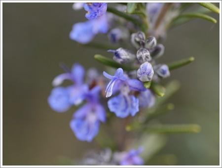 我が家は春でも花が少ないから、野草で我慢しましょう(*⌒∇⌒*)テヘ♪_b0175688_22484405.jpg