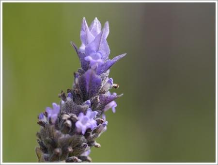 我が家は春でも花が少ないから、野草で我慢しましょう(*⌒∇⌒*)テヘ♪_b0175688_22484839.jpg